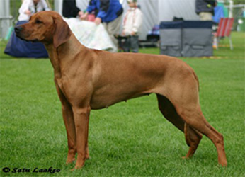 http://www.ridgeback-abuu.de/resources/shanga5june05_250.jpg